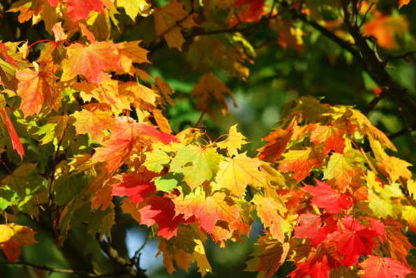 Yoya ayurvéda automne