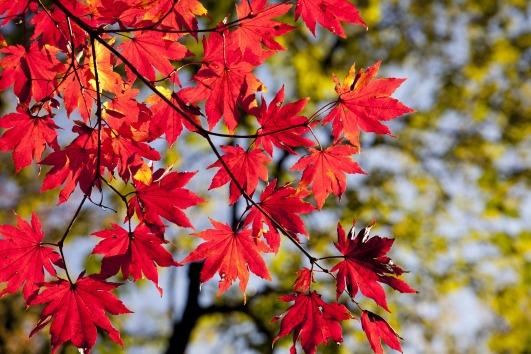 yoga ayurveda automne
