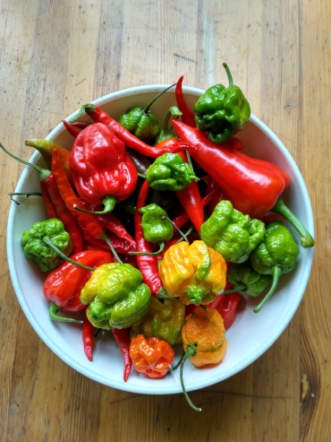 spicy-peppers-2043552_1920