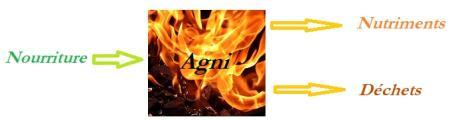 Agni digestion ayurveda