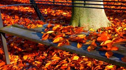 autumn-2756123_1920