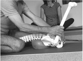 anatomie dos yoga lyon