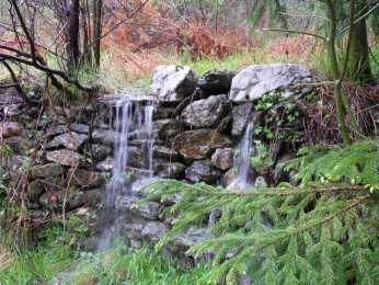 Transgardon, séquoïa commun