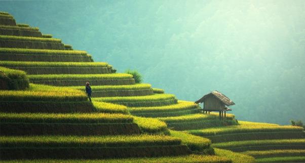 agriculture yoga ayurveda lyon