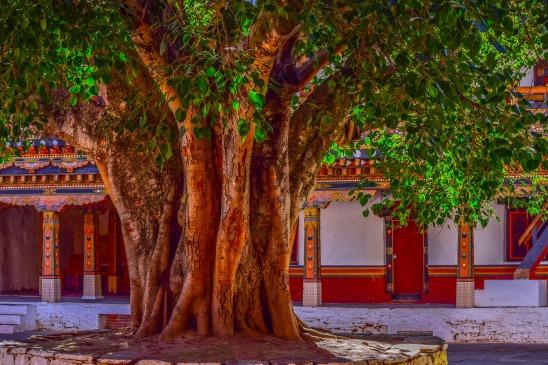 tree-2691189_1920