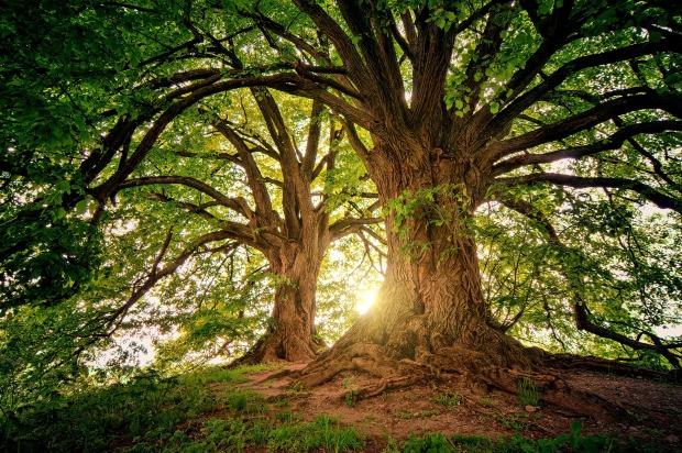 yoga ayurvéda lyon - arbre